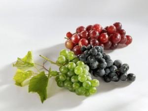Muskateller grapes, M??ller Thurgau & Muskat Trollinger