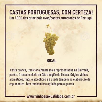 casta_bical